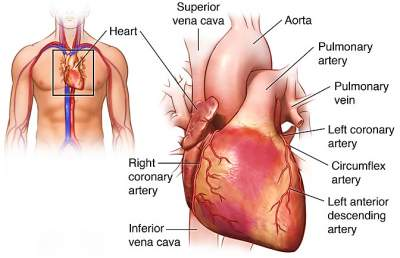 Heart transplant in india right side of the heart ccuart Images