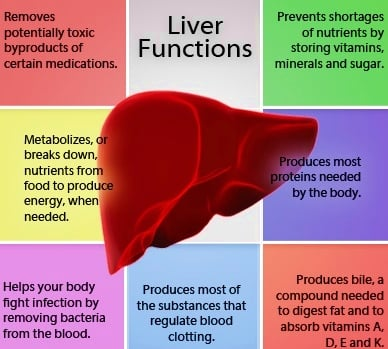Functions of a Liver