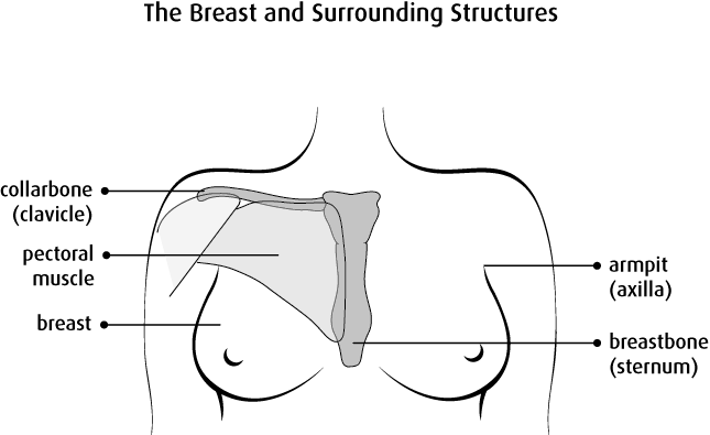 Overview of Female Breasts